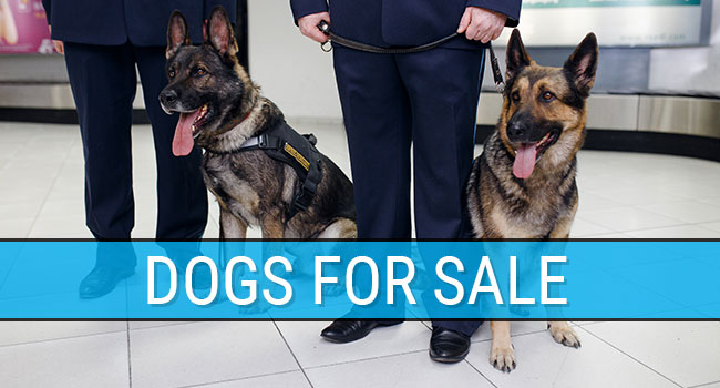CQB K-9 Dogs For Sale