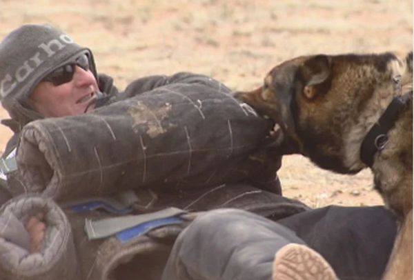 Dogs in Colorado Trained for War