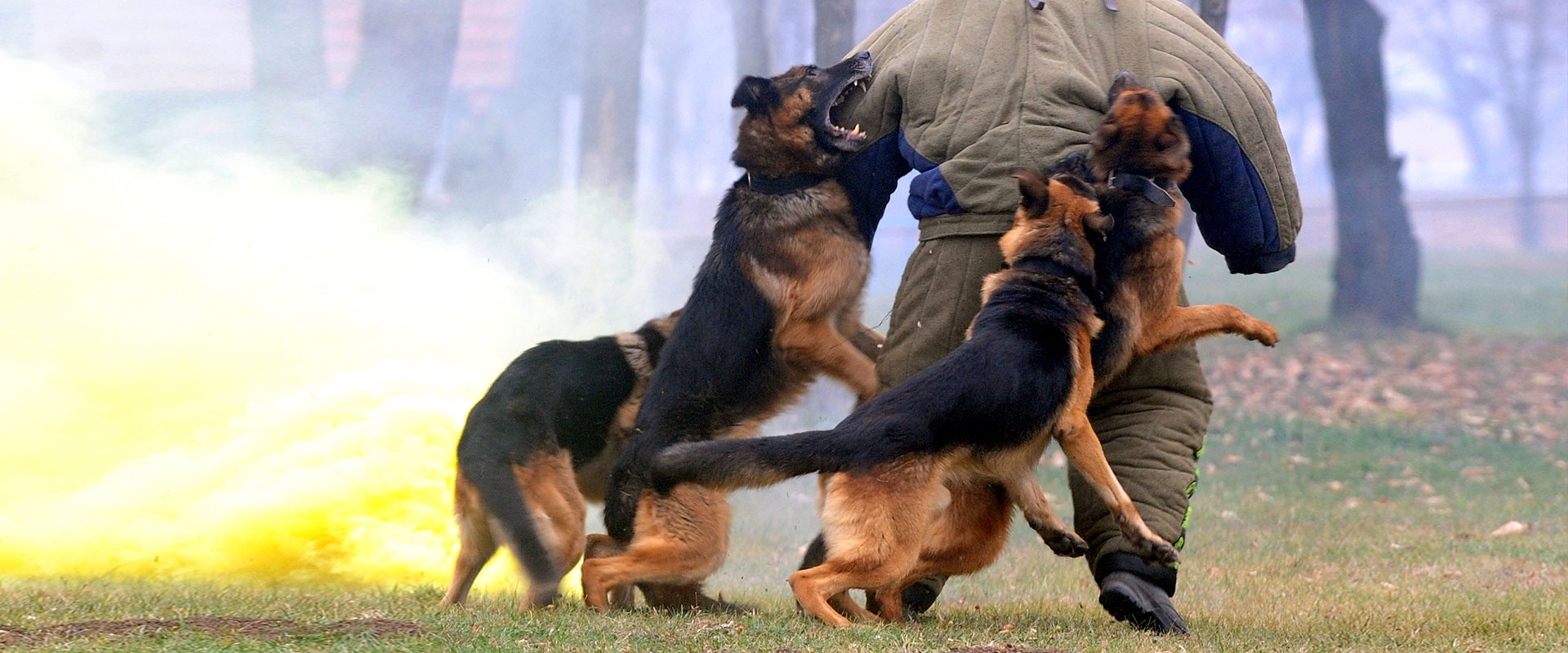 CQB K-9 Personal Protection Dogs